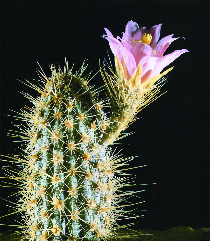 vous l'aurez compris..un cactus en verre!