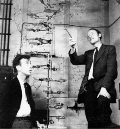 Watson et Crick devant leur modèle de la structure de la molécule d'ADN