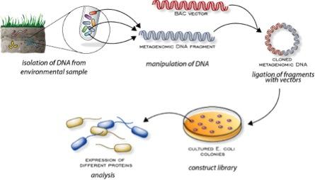 Figure extraite de http://www.bioteach.ubc.ca/Biodiversity/Metagenomics/index.html