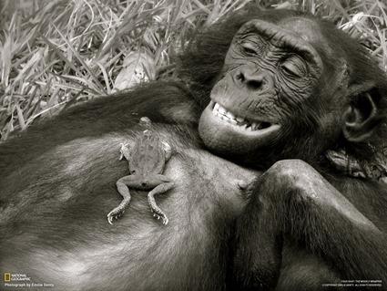 10-creepy_bonobo_thumb